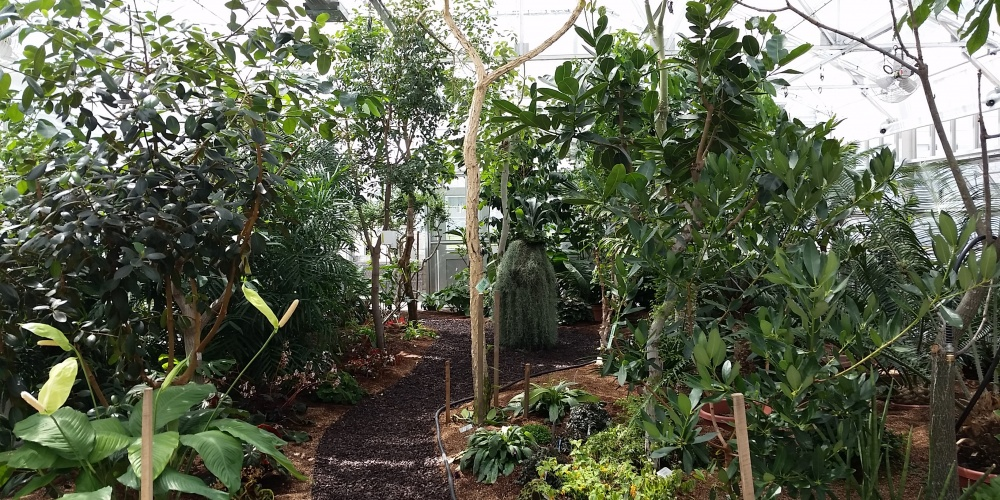 Photo of the Liberty Hyde Bailey Conservatory interior